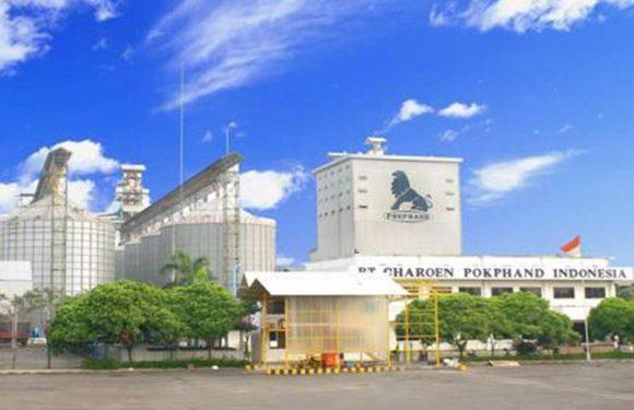 Lowongan Kerja PT Charoen Pokphand Indonesia Tbk Balaraja Tangerang